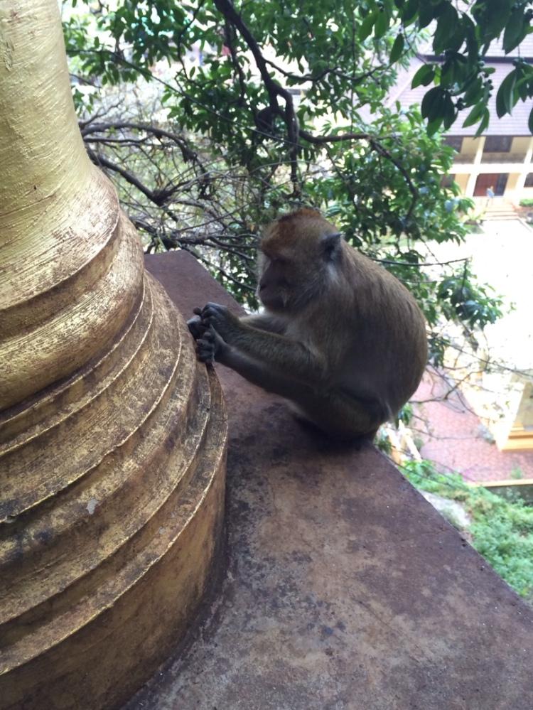 monkeys on stairs
