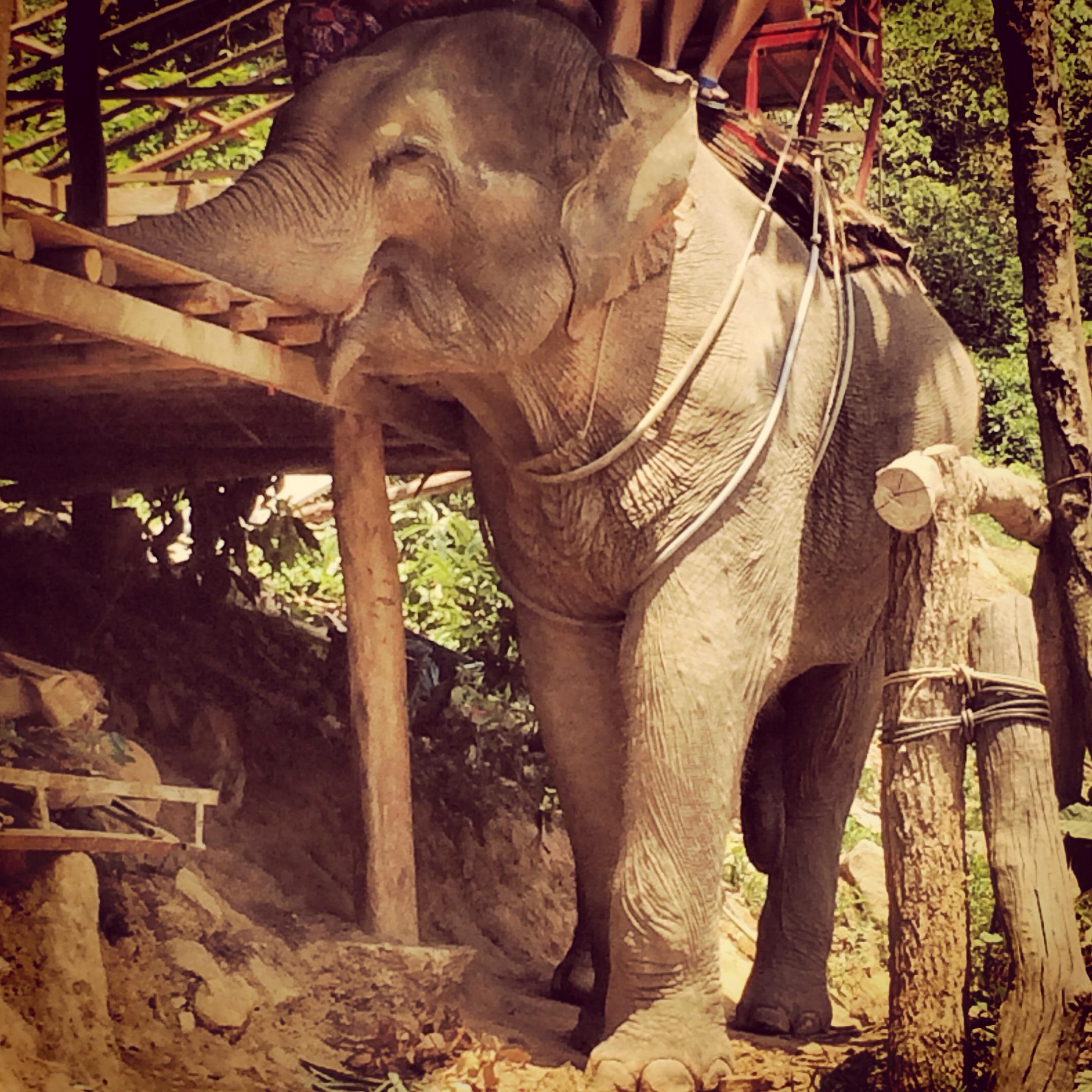 Ko lanta elephant trekking