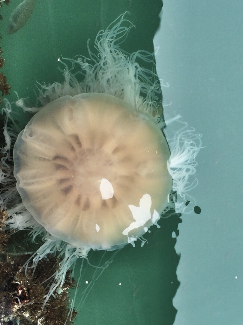 Vietnam halong bay jellyfish