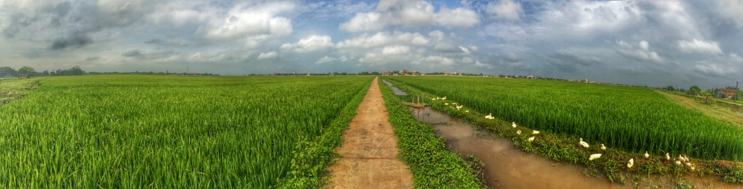 Rice paddies tam coc vietnam