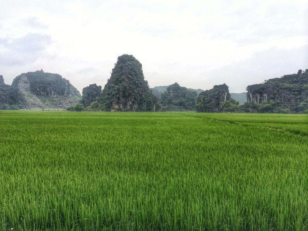 rice fields around tam coc