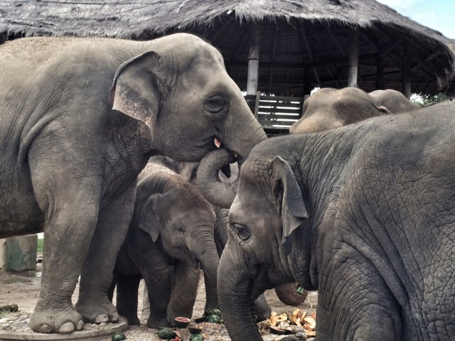 Animals at Elephant Nature Park in Chiang Mai