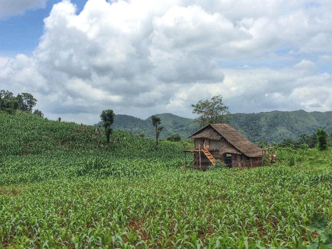 lone mountain cabin in corn field