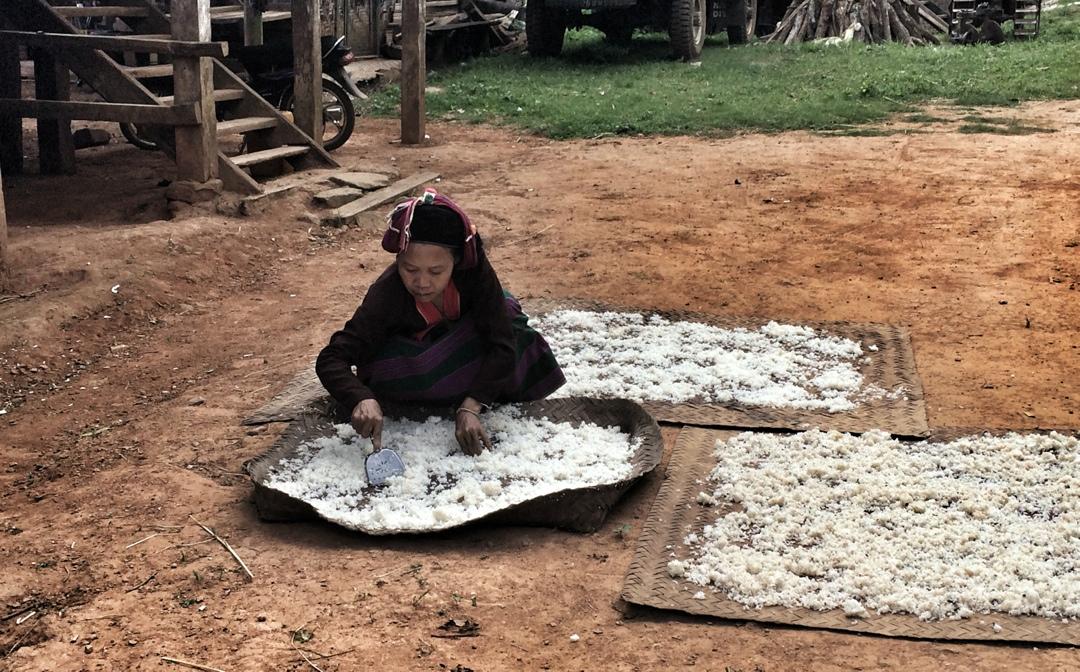 palaung village woman drying rice