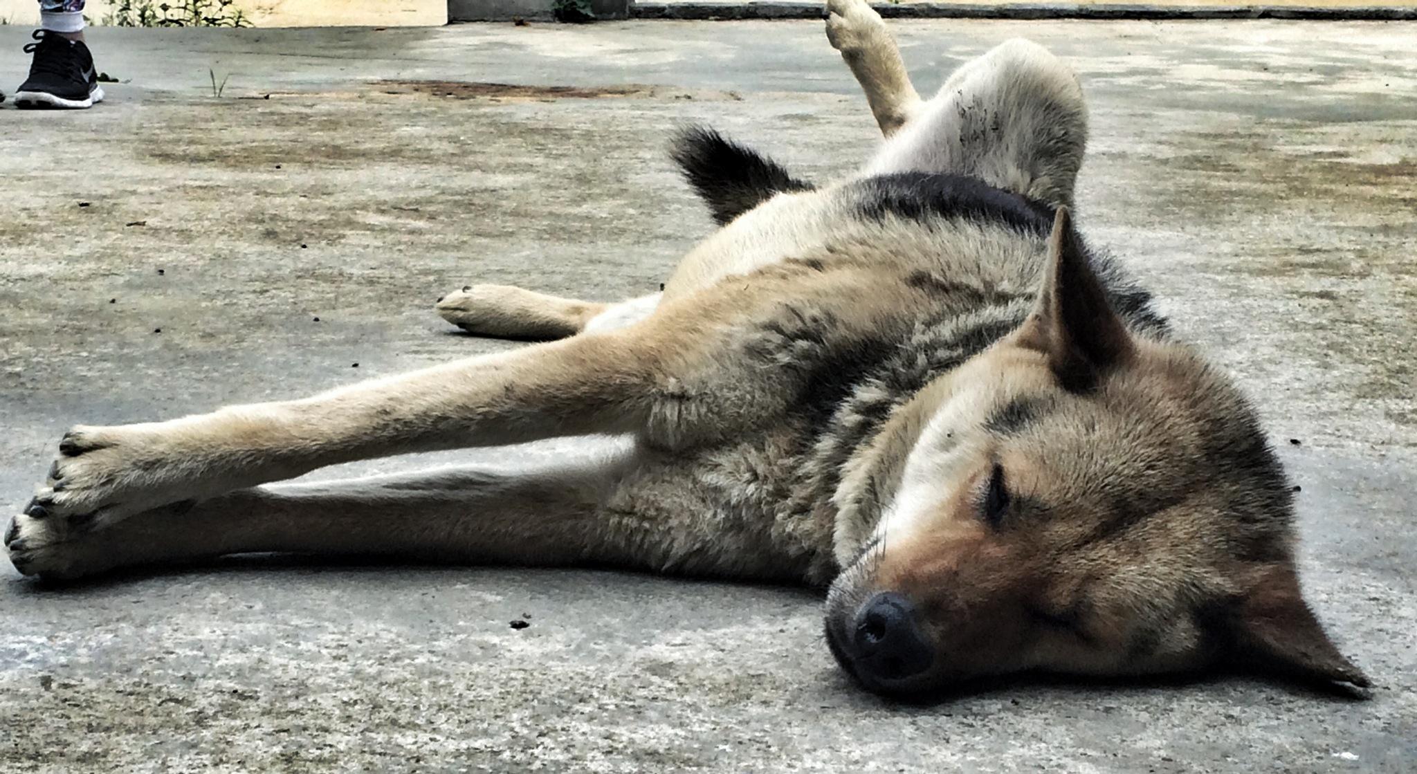 lazy street dog enjoying the sun