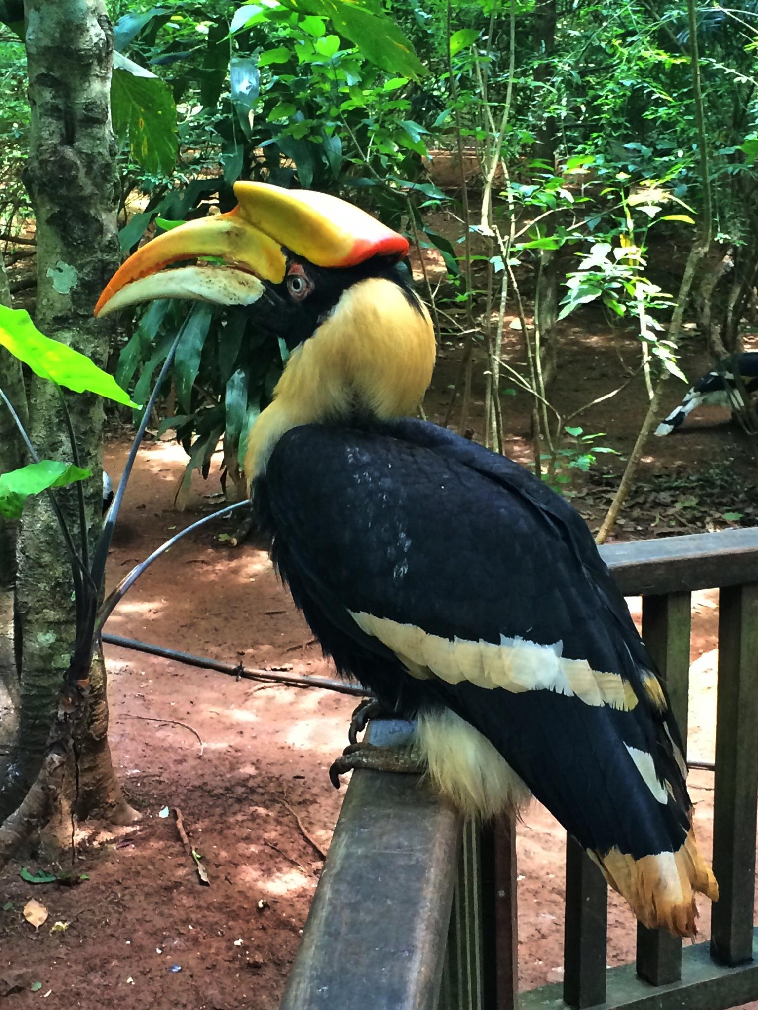 crazy colorful exotic bird