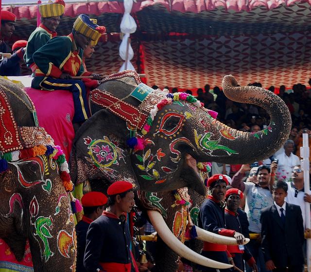 Mysore elephant parade for festival