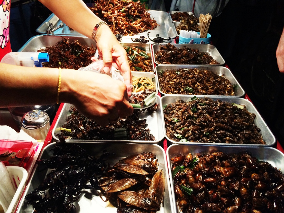 Delicious choice of cripsy insects and bugs on khaosan